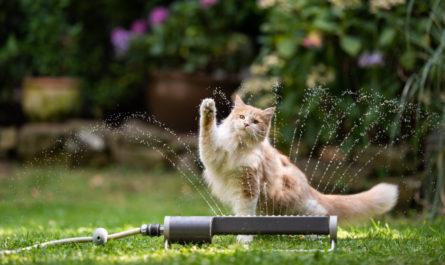 chat de la canicule