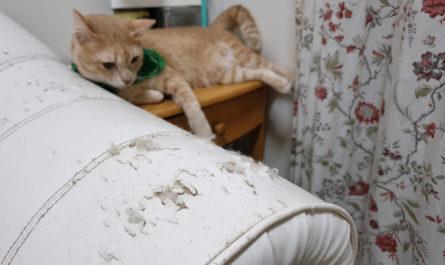 protéger les meubles des animaux domestiques