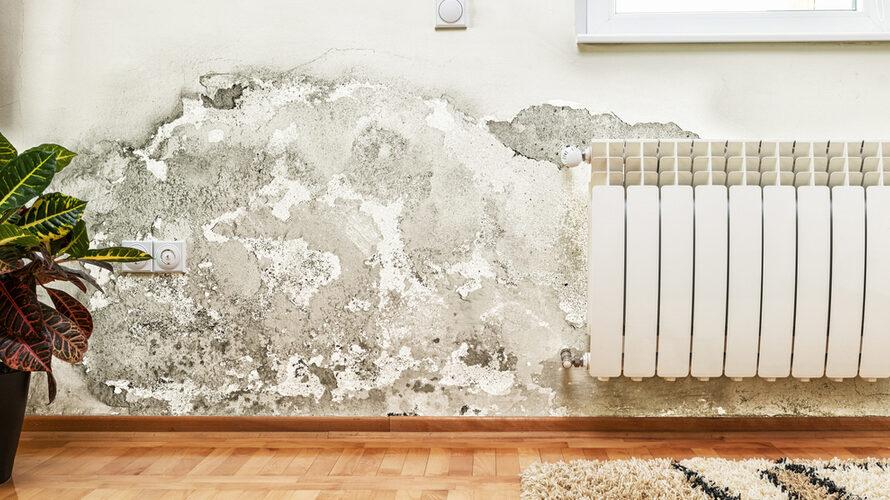 Solutions pour venir à bout des murs humides